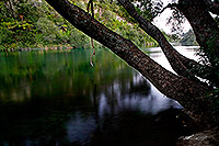 Calm river with tree
