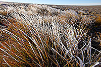 Frosty Tussock Grass canvas print