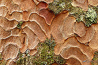 Kauri tree bark patterns